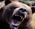 Bear Jigsaw