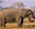 Big Elephant Jigsaw