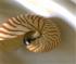 Sea Shell Jigsaw