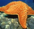 Sea Star Jigsaw