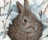 Snow Rabbit Puzzle